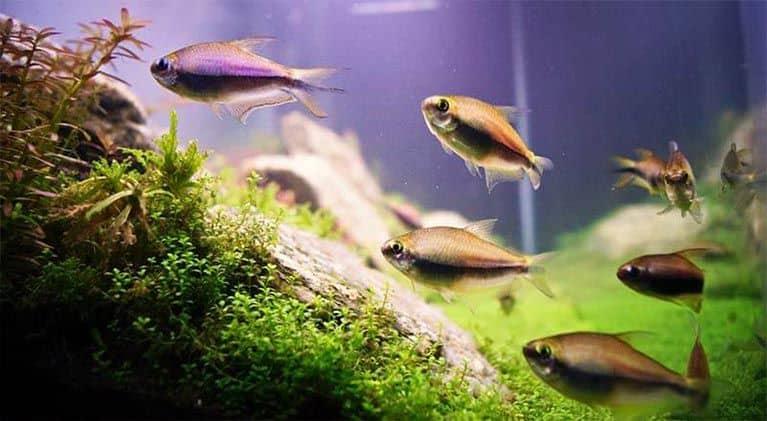 Selecciona los peces para principiantes que habitarán en tu nueva pecera
