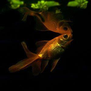tanque peces agua fria