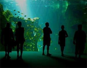 La contemplación de una pecera agua salada relaja la mente, y en este artículo vamos a ver el acuario marino principiante.