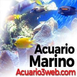 Gran guía sobre la acuariofilia marina