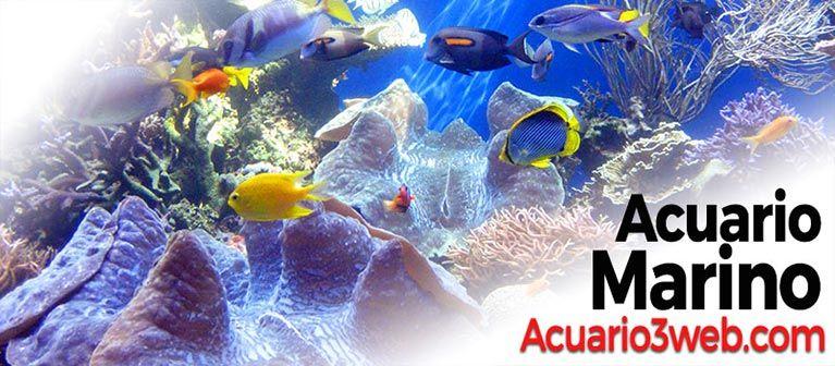 Guía de Acuario3web.com de cómo hacer un acuario marino económico o tanque de agua salada paso a paso