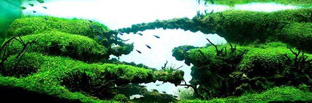 La gran guía de las peceras plantadas para principiantes: Montar acuario plantado