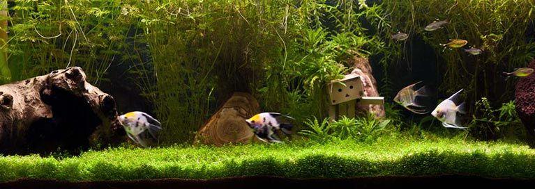 Peceras de agua dulce tropical
