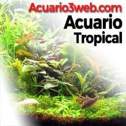 Acuarios de agua dulce y peceras tropicales