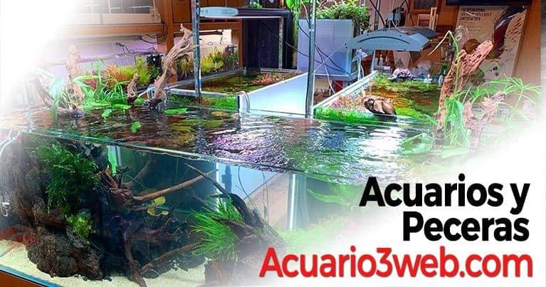 Categoría dedicada a los acuarios y tanques de peces