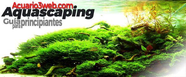 Aquascaping para principiantes - Guía paso a paso de paisajismo acuático