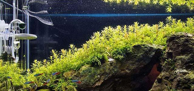 Co2 para las plantas acuáticas naturales del acuario