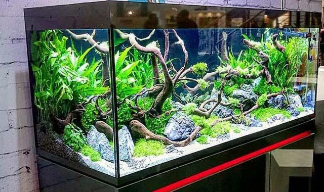 en Acuario3web.com Te ayudamos a comprar un acuario que se ajuste a tus preferencias y necesidades
