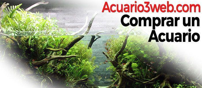Si estás buscando una pecera o acuario para comprar, has llegado a tu tienda de acuarios online: Acuario3web.com