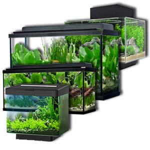 La pecera, urna o tanque son indispensables accesorios peceras de agua dulce