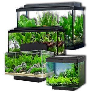 Si estás buscando un acuario o pecera para comprar, en Acuario3web.com podemos orientarte para que compres el tanque que mejor se adapte a tus necesidades y preferencias