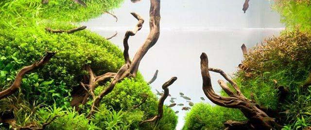 Espacio en el AcuarioPlantado y población de plantas acuario principiantes