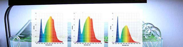 Luz necesaria para acuario plantado. El espectro de la luz para acuario plantado es importante para las plantas naturales