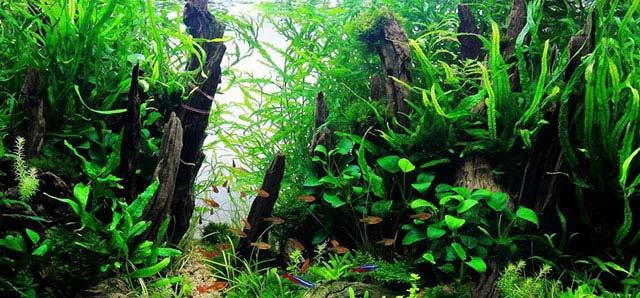 Fertilizantes para el acuario plantado