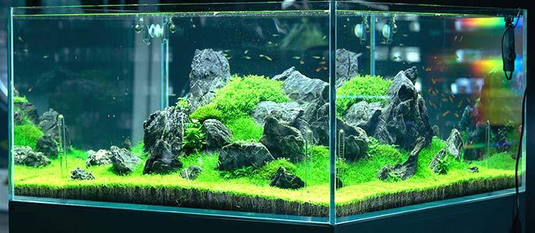 Introducción al ciclado o maduración de un acuario o pecera