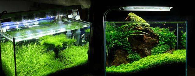 Pantallas y lámparas LED para acuarios plantados