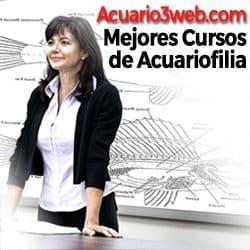 Los mejores cursos y formaciones sobre acuariología y acuarismo