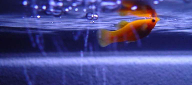 La oxigenación del agua del acuario