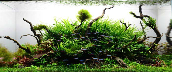 Los peces son el factor clave en un paisaje acuático realista