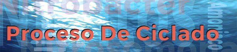 cómo ciclar acuario: Veamos la función de las bacterias nitrificantes de tu acuario en el ciclado del acuario