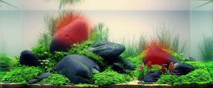 Los puntos focales equilibran el diseño de los acuarios basados en el paisajismo acuático