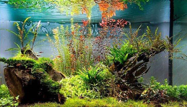 Química básica del agua de los acuarios plantados paso a paso: parámetros agua acuario plantado