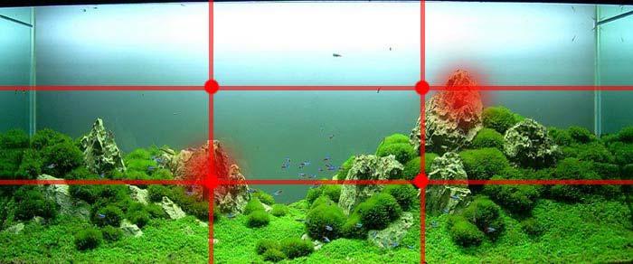 La regla de los tercios la encontrarás en la gran mayoria de acuarios aquascapers