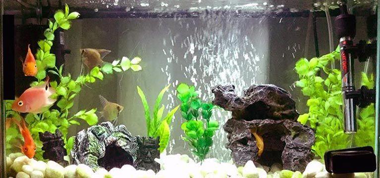Clases y tipos de tanques de peces para practicar la acuariofila