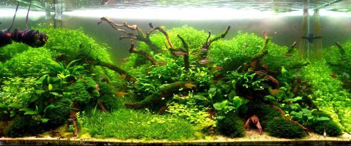 Hay que pensar bien el tipo de plantas que vamos a utilizar en nuestro aquascaping