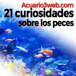 Ver curiosidades de los peces