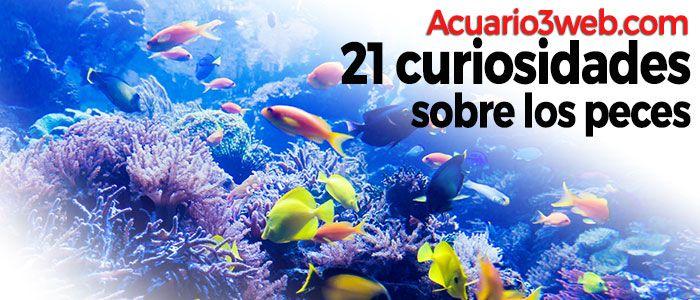 Descubre 21 Curiosidades sobre los peces