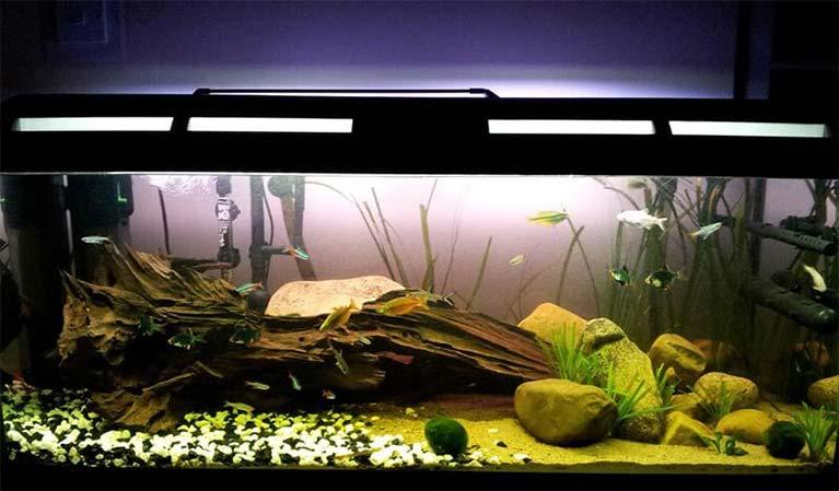 Sistema de filtros de agua para peceras