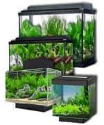 Para iniciar acuario es imprescindible el tanque, la urna, pecera, acuario...