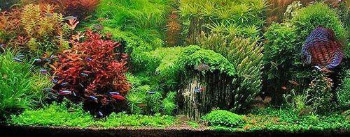 Un espectacular acuario