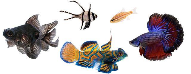 Características de los peses: El cuerpo del pez tiene ciertas características que no cuentan cosas sobre cómo vive