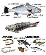 Te explicamos todo sobre los peces, hoy nos adentramos en las características principales de los peces