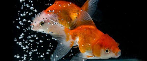 tTendrás que ciclar tu acuario antes de añadir cualquier pez