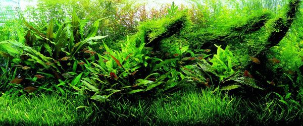 Espectacular acuario con plantas naturales