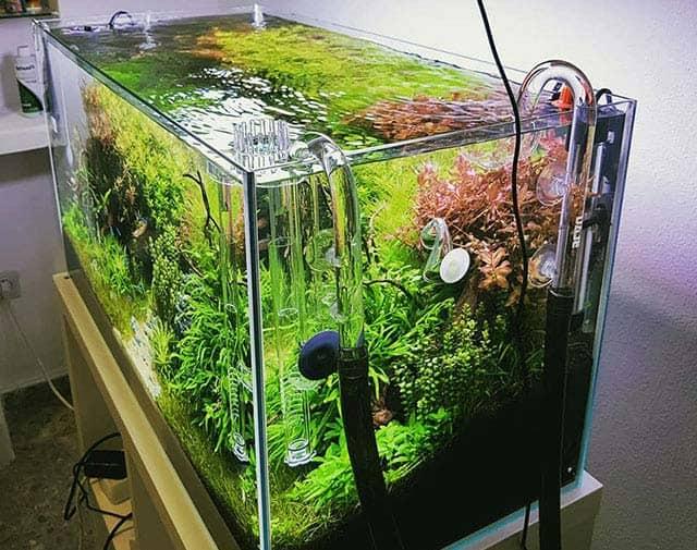 Ten en cuenta el tamaño del tanque para comprar el acuario que mejor se adapte a tus necesidades