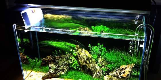 Cómo elegir el filtro de cascada adecuado para tu acuario