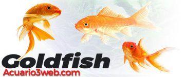 Pez Goldfish: Guía De Cuidados