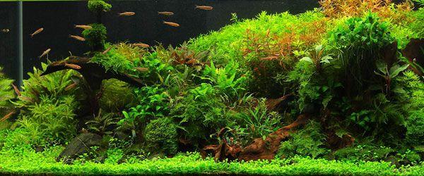 Una pecera espectacualr con plantas naturales