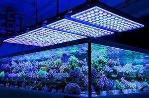 luces para peceras de Iluminación LED Y Acuarios De Arrecife