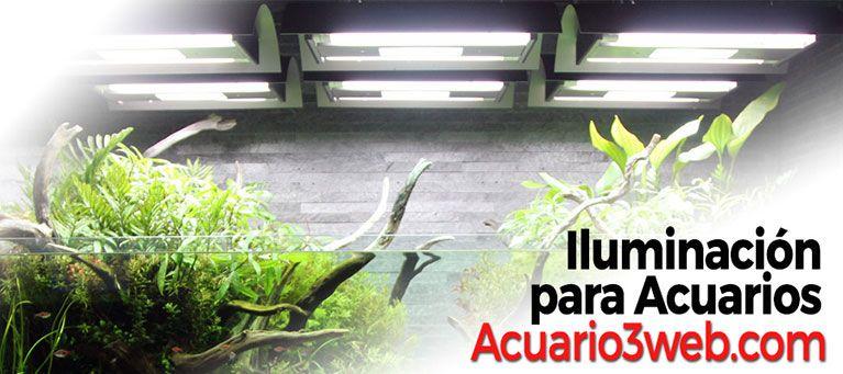 Iluminación para acuarios y luces para pecera