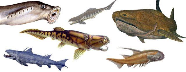 Información sobre el pez