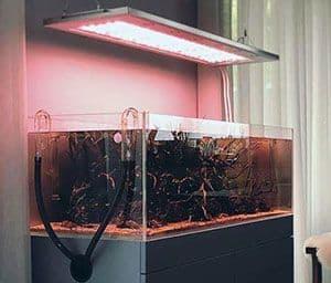 La luz LED y el acuario de agua dulce