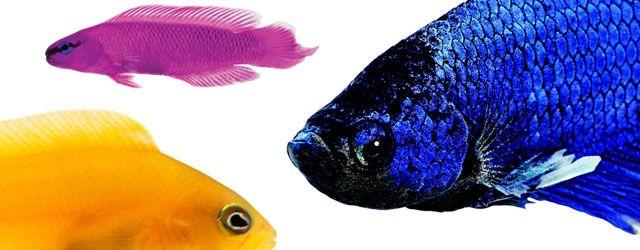 Los Peces características: La gran mayoría de los peces está recubierto por escamas