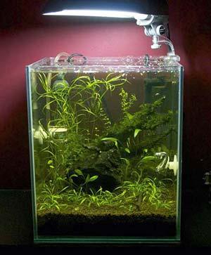 Luz acuario: Lámparas para pecera y pantallas para acuarios