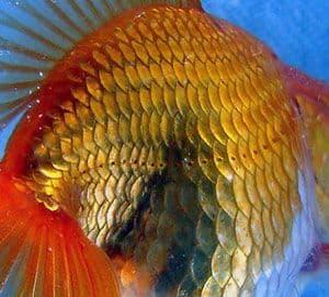 Entre las  principales características del cuerpo del pez destaca la línea lateraral.