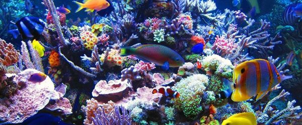 Necesidades especiales de los peces de agua salada